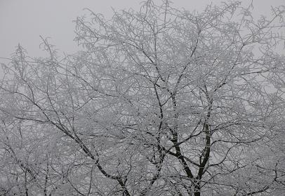 winteravmbdec07.jpg